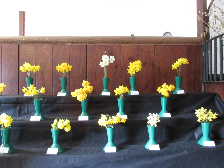 The Daffodil Festival at Trelissick is a popular annual event