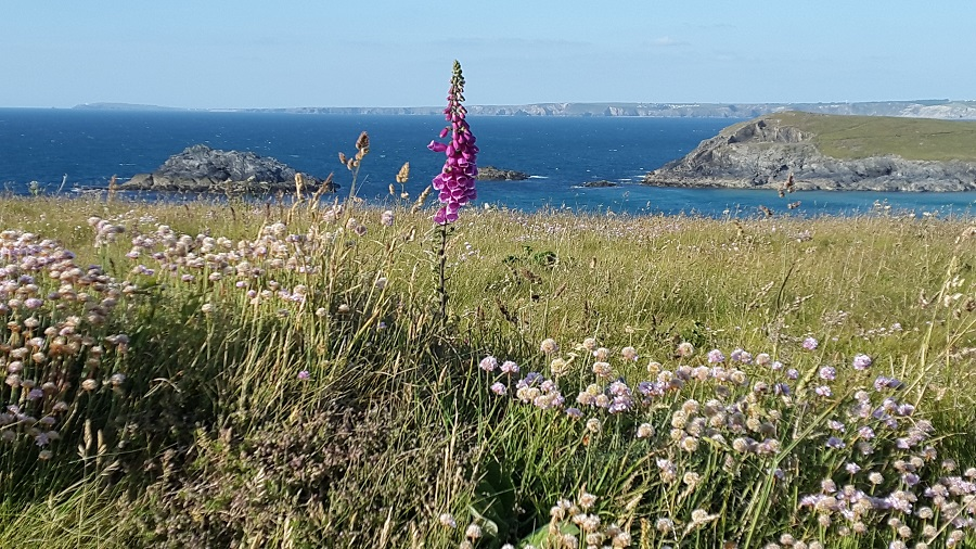 Polly Joke's wildflowers are spectacular
