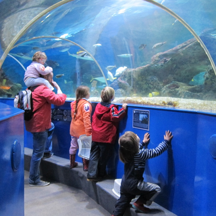 Blue Reef Aquarium is perfect for a baby friendly day out in Cornwall