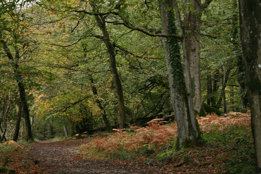 Enjoy an atmospheric walk in the woods on during your November break in Cornwall