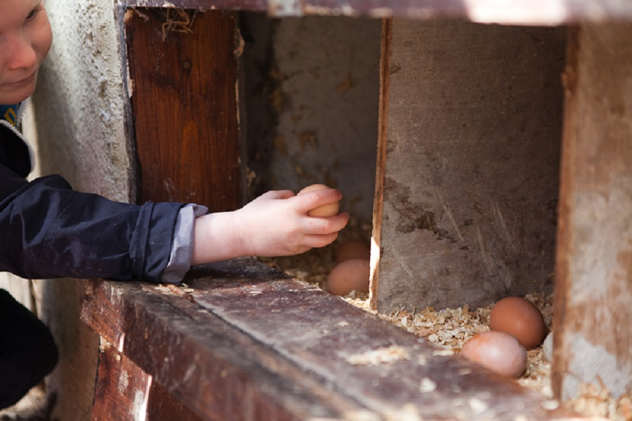Toddlers will love helping collect the eggs each morning at Bosinver