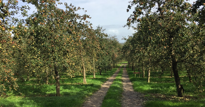 Healey's cider farm offers a fascinating day out for visitors to Cornwall