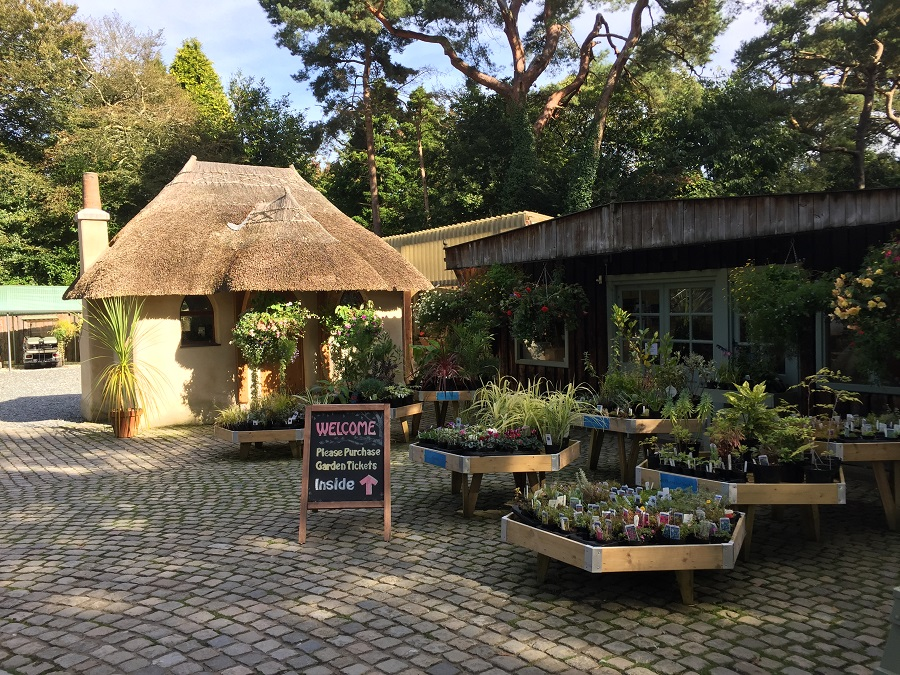 Pinetum Gardens is one of Cornwall's dog friendly gardens