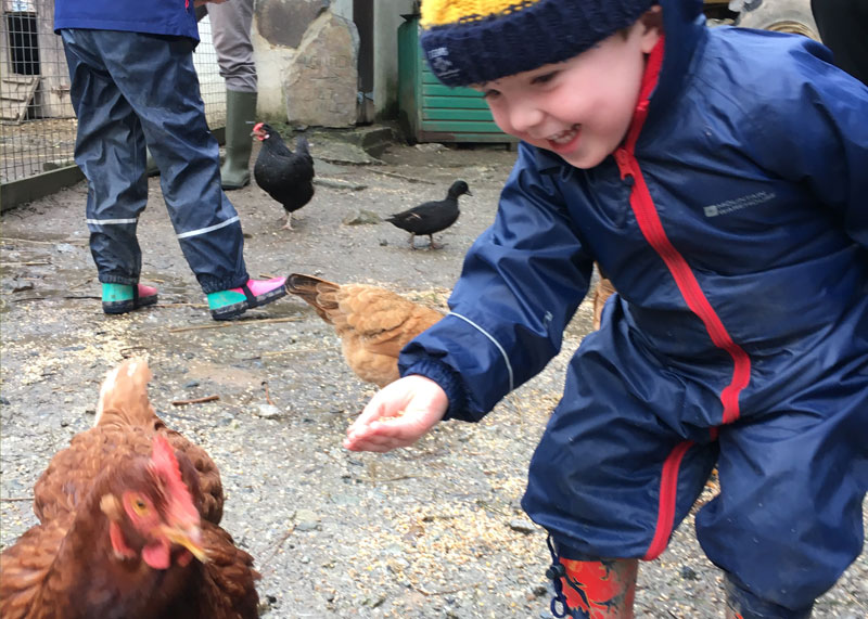 Toddler feeding the hens at Bosinver