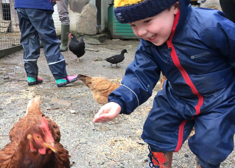 Toddler feeding the hens at Bosinver