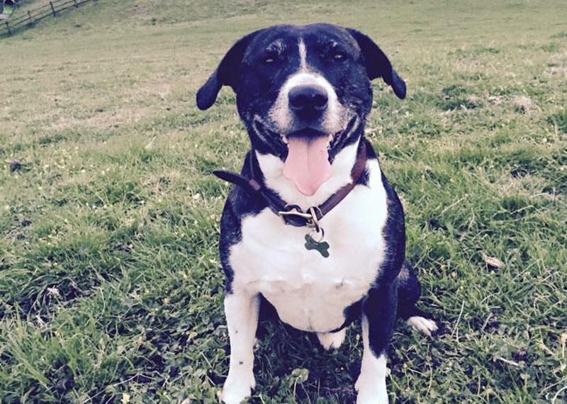 Happy dog 'Buddy' at Bosinver - thanks to Marina Turner
