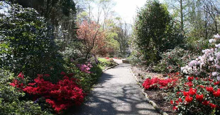 Trewithen Garden