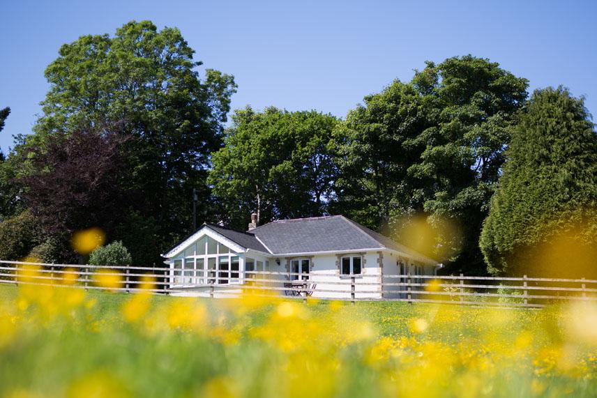 Buddleia cottage at Bosinver