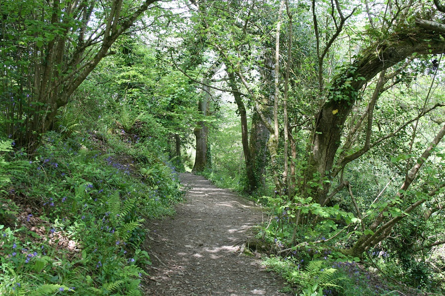 Explore Cornwall's wooded paths and follow in Daphne du Maurier's footsteps