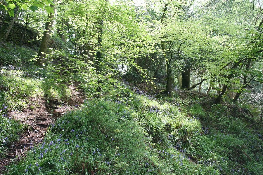 Bluebell woods, Cornwall