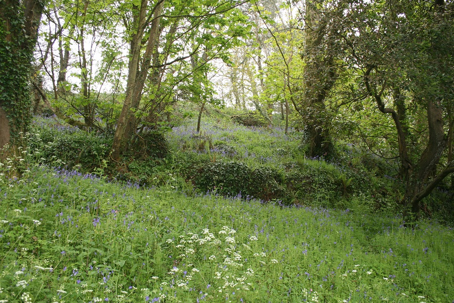 Bluebells on the Roseland Peninsula
