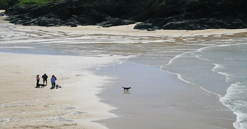 Cornwall has several dog friendly beaches where your four-legged friends are welcome all year round