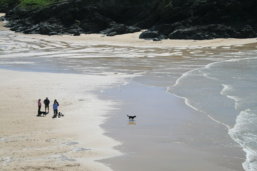 Explore Cornwall's beaches with your dog