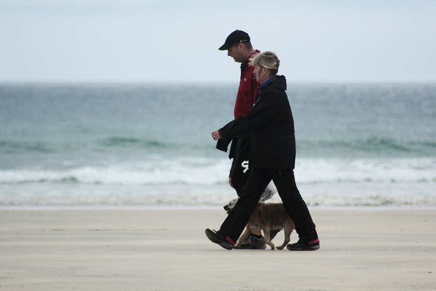 Dog walking on a beach