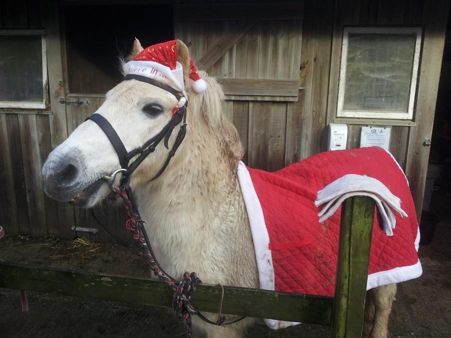 Secret, our pony, dressed up as Santa