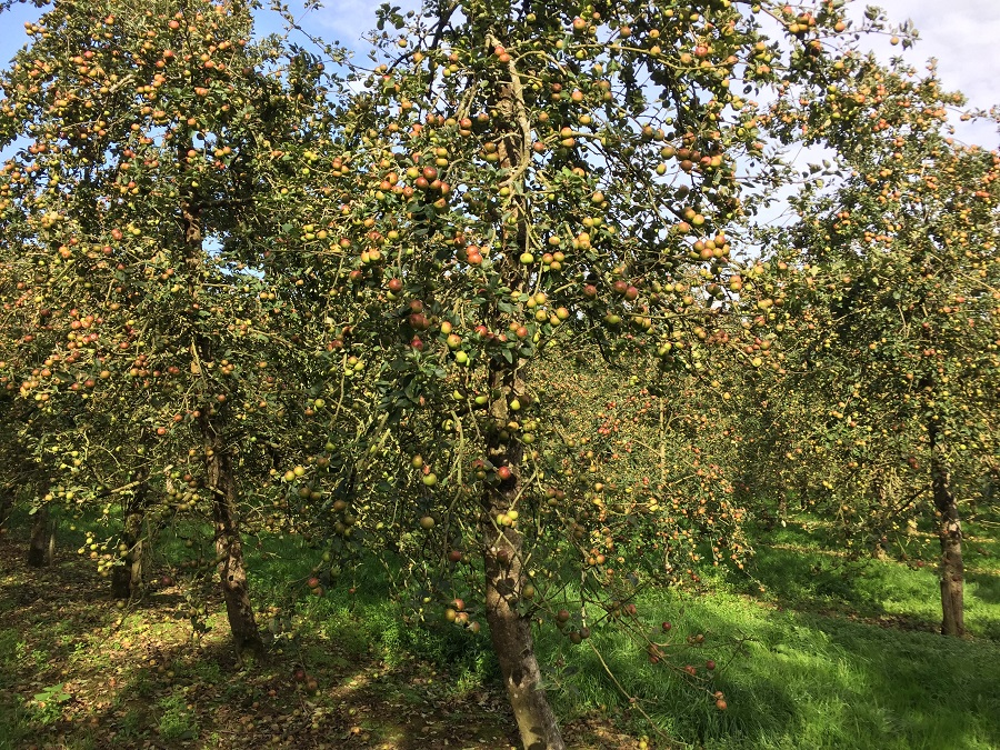 Explore the orchards at Healey's Cyder Farm