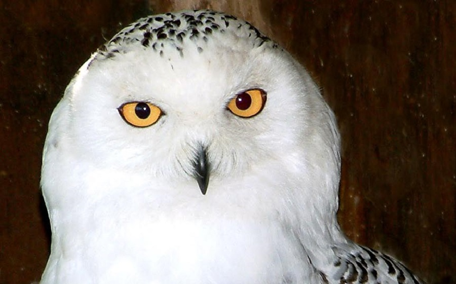 Enjoy the family friendly Owl Prowl trail at Paradise Park during October half term