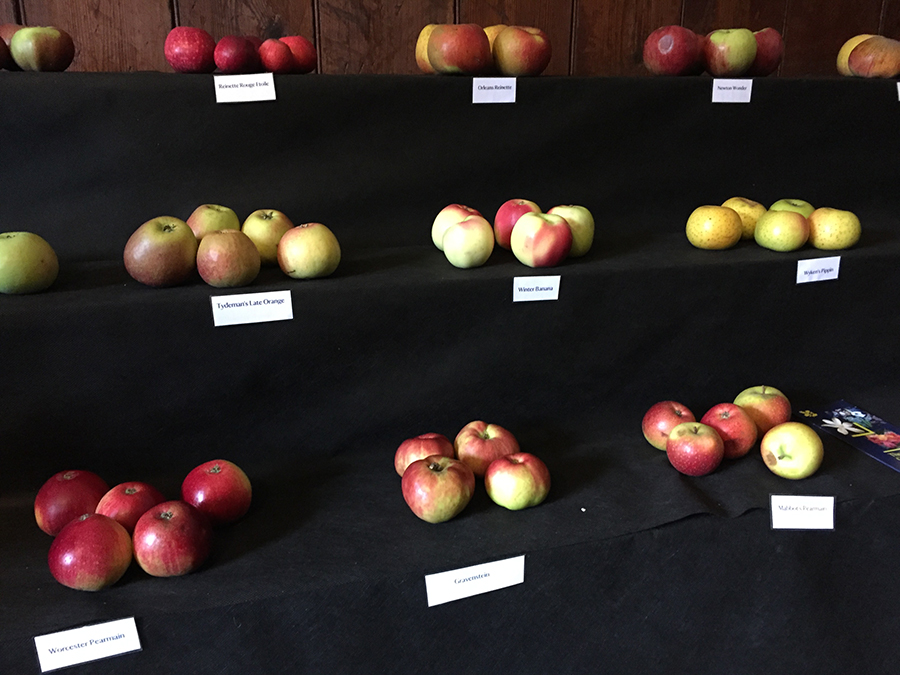 Apple weekend at Trelissick Gardens, Cornwall