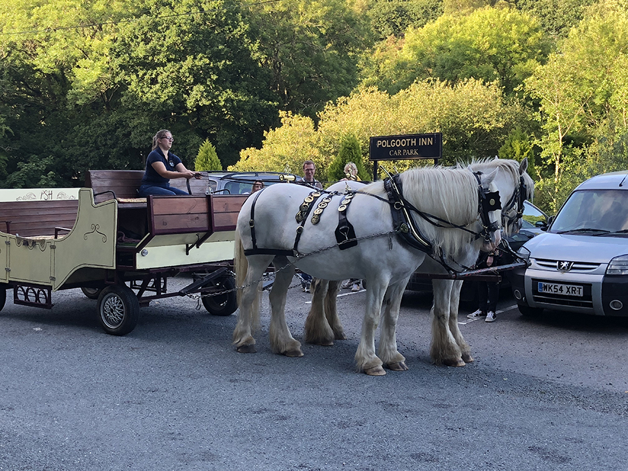 Arriving by horse and carriage at The Polgooth Inn from Bosinver