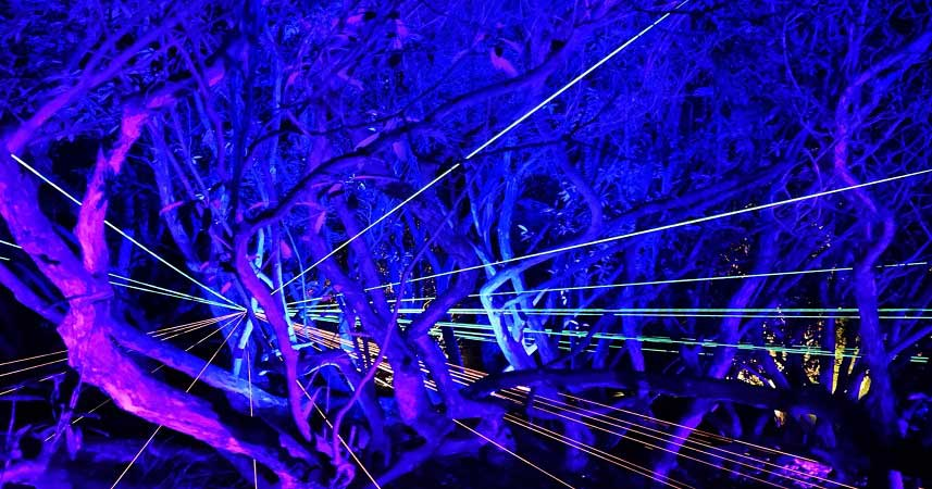 Heligan by Night - garden illuminations