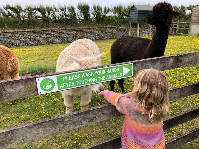 Jasmine feeds alpaca at Old MacDonald's Farm Park