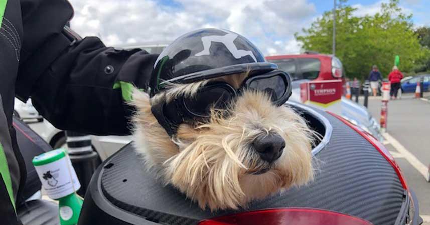 Freddie the biker dog